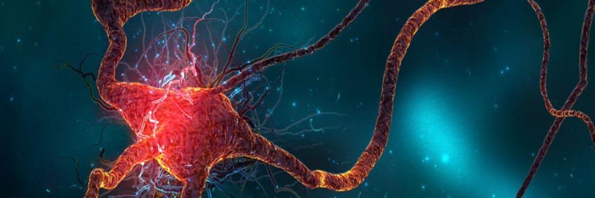neuron photo
